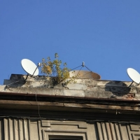 ierburi si antene (1)