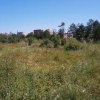 Parcul Feroviarilor/Foto: Radu Bărăian