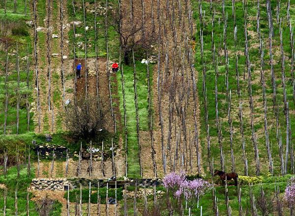 Câmp din Țara Oașului / Fotoreporter: Remus Țiplea