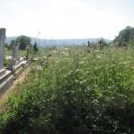 Buruienile au năpădit mormintele de la periferia cimitirului din Zalău