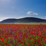 Toxinele produse de OMG afectează flora si fauna salbatice,   solul și apele