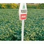 Absurdul introdus prin lege: organisme modificate genetic în arii protejate
