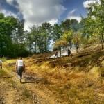 Incendiu de vegetaţie uscată lichidat pe Valea Usturoiului