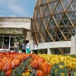 Grădina Botanică Jibou funcţionează în cadrul Centrului de Cercetări Biologice