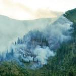 Arde pădurea la Borşa