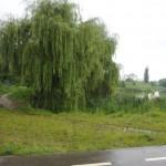 Arhitecți și urbaniști împotriva construcțiilor din zona lacului Gheorgheni