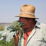 Fermierul Chereche; promovează morcovii româneşti,   dar şi broccoli italieneşti/Foto: Dan Bodea