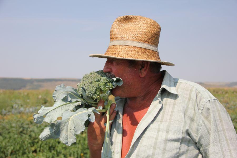 Fermierul Chereches promovează morcovii româneşti, dar şi broccoli italieneşti/Foto: Dan Bodea
