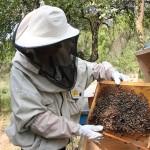 În cei 100 de stupi din grădină,   albinele nu dorm niciodată/ Foto: Dan Bodea