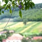 Bădăcin, satul din Sălaj în care a s-a născut Iuliu Maniu