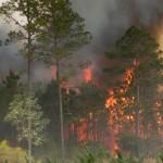 Incendiul de pădure s-a extins pe 200 de hectare