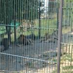 Opt lei trăiau pe 100 de metri pătrați