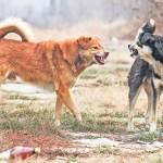Un băiat de patru ani, ucis de câini într-un parc din Capitală