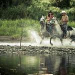 """""""Caii lupilor"""": animalele salvate de la moarte atrag turiștii din Vest"""