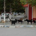 Costurile pentru eutanasierea unui câine se ridică la 270 de lei / Sursa foto: jurnalulzilei.ro