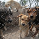 În Baia Mare au fost înregistrate doar cinci adopţii în acest an / Sursa foto: facebook.com