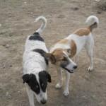 echipele de ecarisaj au adunat anul acesta de pe străzile din Zalău 279 de câini comunitari / Sursa foto: facebook.com