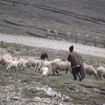 Ciobanul şi-a omorât colegul de stână şi l-a desfigurat pe altul