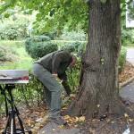 Un expert maghiar va verifica starea arborilor din Grădina Romei