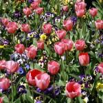 sursa foto: flori-cultura.ro
