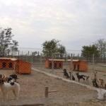 Sterilizarea câinilor fără stăpân costă Primăria 4.500 lei pe lună