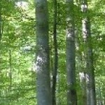 """Soluţii pentru """"criza"""" lemnelor din Mărişel"""