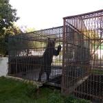 Urşii vor ajunge la Rezervaţia Liberty din Zărneşti