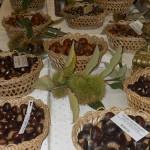 Prezenţa castanului comestibil în zona Baia Mare este menţionată încă din anul 1642
