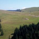 Zona Padiș,   perla turistică a județului Bihor