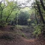 Petiție pentru oprirea tăierilor abuzive din Pădurea Baciu