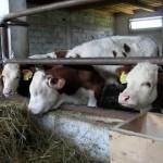 Perceperea unor sume de bani de la fermierii care solicită adeverinţe este ilegală / Sursa foto: glasul.ro