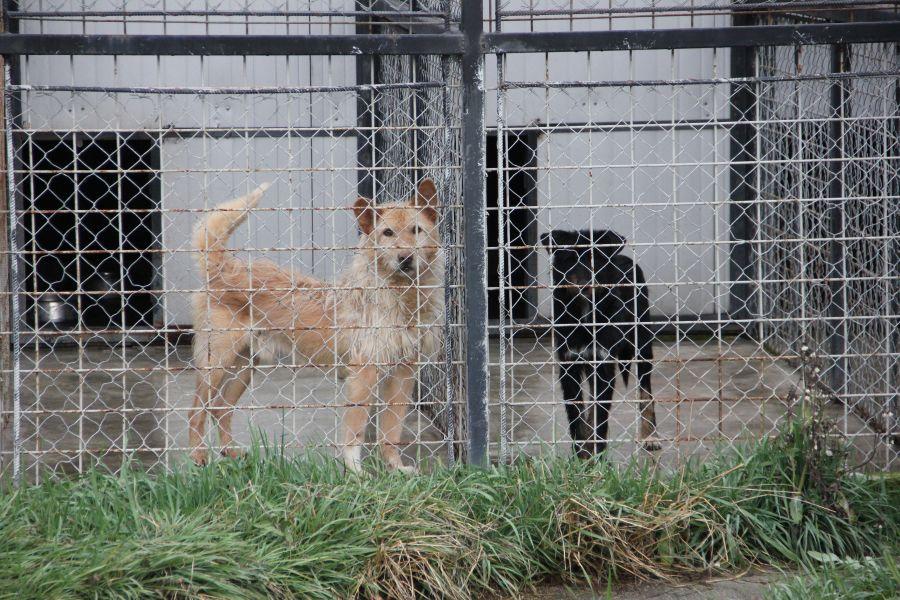 Centrul de ecarisaj din Cluj are un spaţiu limitat la 140 de locuri pentru câinii fără stăpân/Foto: Dan Bodea