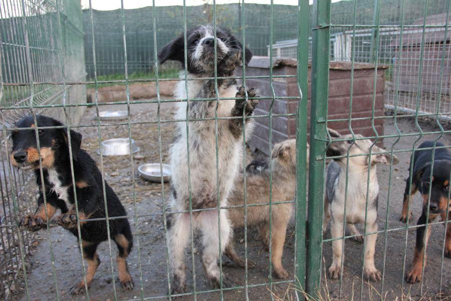 Câinii găzduiţi de pensiunea de animale din Chinteni, Cluj, în aşteptarea unui viitor mai bun/Foto: Dan Bdea