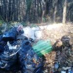 Clujenii spun Stop defrișării. Petiție pentru salvarea pădurilor