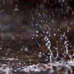 Prognoza meteo: vreme închisă dar caldă