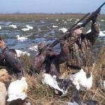 Evoluţia tehnicilor de vânătoare, în expoziţie (foto obiectivtulcea.ro)