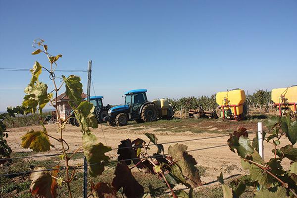 Cea mai mare podgorie din această zonă a României a fost înființată acum trei ani