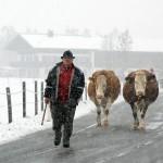 """Fermierii clujeni: """"Perioada de tranziţie pentru laptele conform a fost un dar otrăvit"""""""