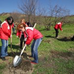 10.000 de arbori vor fi plantați în Pădurea Clujenilor