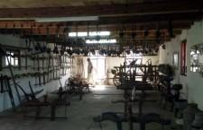 Măria Sa,   Bivolița. Localnicii din Mera au dedicat un muzeu animalului care i-a scos din sărăcie