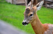 Parcul Zoologic Мoara de Vânt, locul unde te îndrăgosteşti de animale