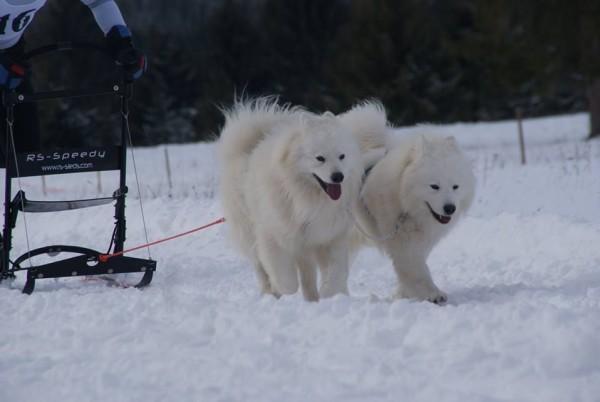 Cuba şi Charlie,   câinii sportivului Paul Chetreanu/Foto: Arhiva personala