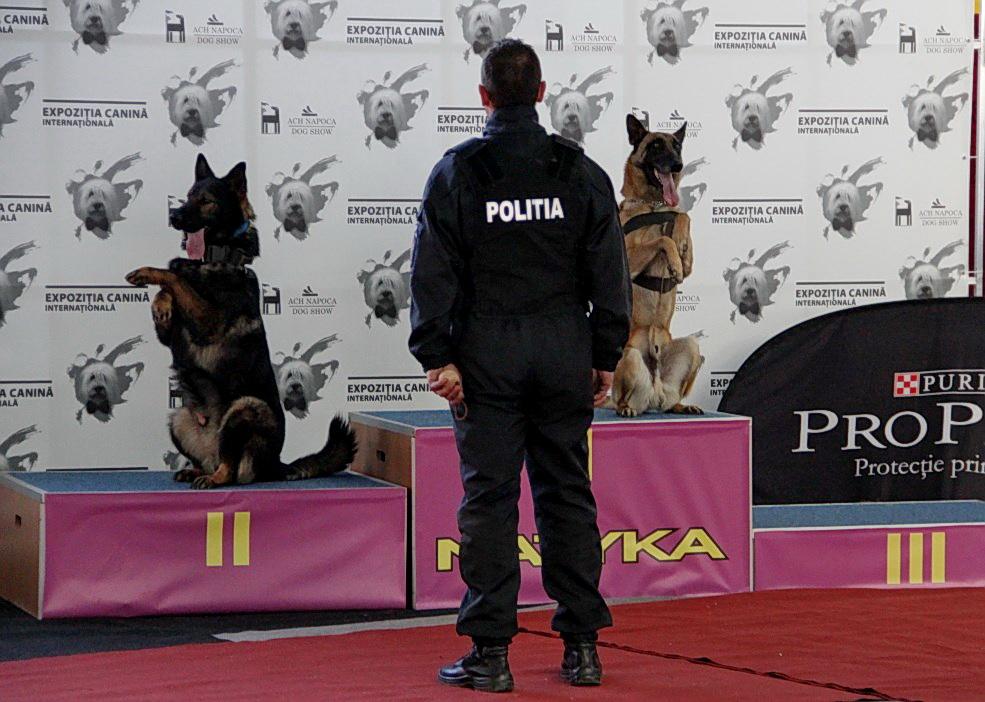 Pentru ca evenimentul să se desfășoare în cele mai bune condiții,   au fost prezenți atât câinii polițiști,   cât și câinii de salvare,   deja celebri în oraș. / Foto: Dan Bodea