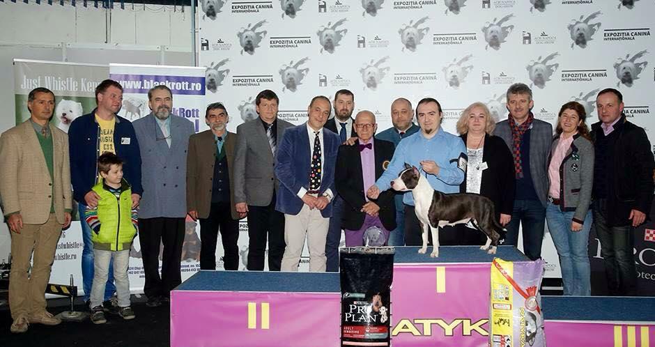 Supreme BIS@ Napoca Dog Show