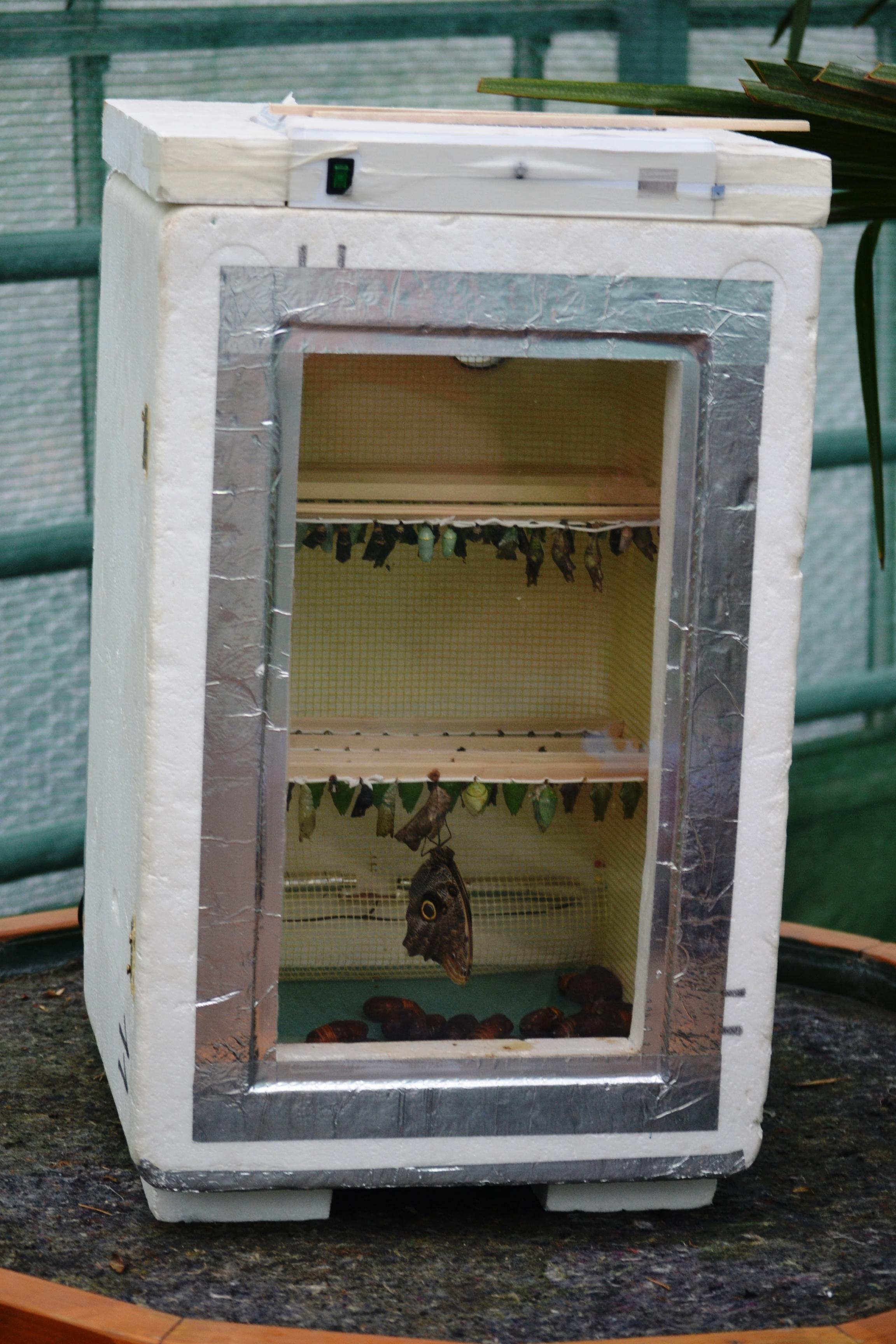 Incubatorul în care sunt ținute pupele / Foto: Maria Man