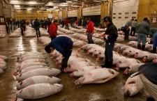 Tsukiji Shij din Tokyo este printre cele mai mari zece pieţe en-gros de peşte din lume. Zilnic pe aici trec peste 2.000 de tone de peşte pe zi. Se doreşte mutarea acesteia în anul 2016 din cauza infrastructurii vechi dar şi a locaţiei extrem de aglomerate.