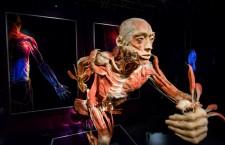 """Lecție de anatomie la mall/Corpuri umane reale,   în expoziția """"OUR BODY: Universul Interior"""""""