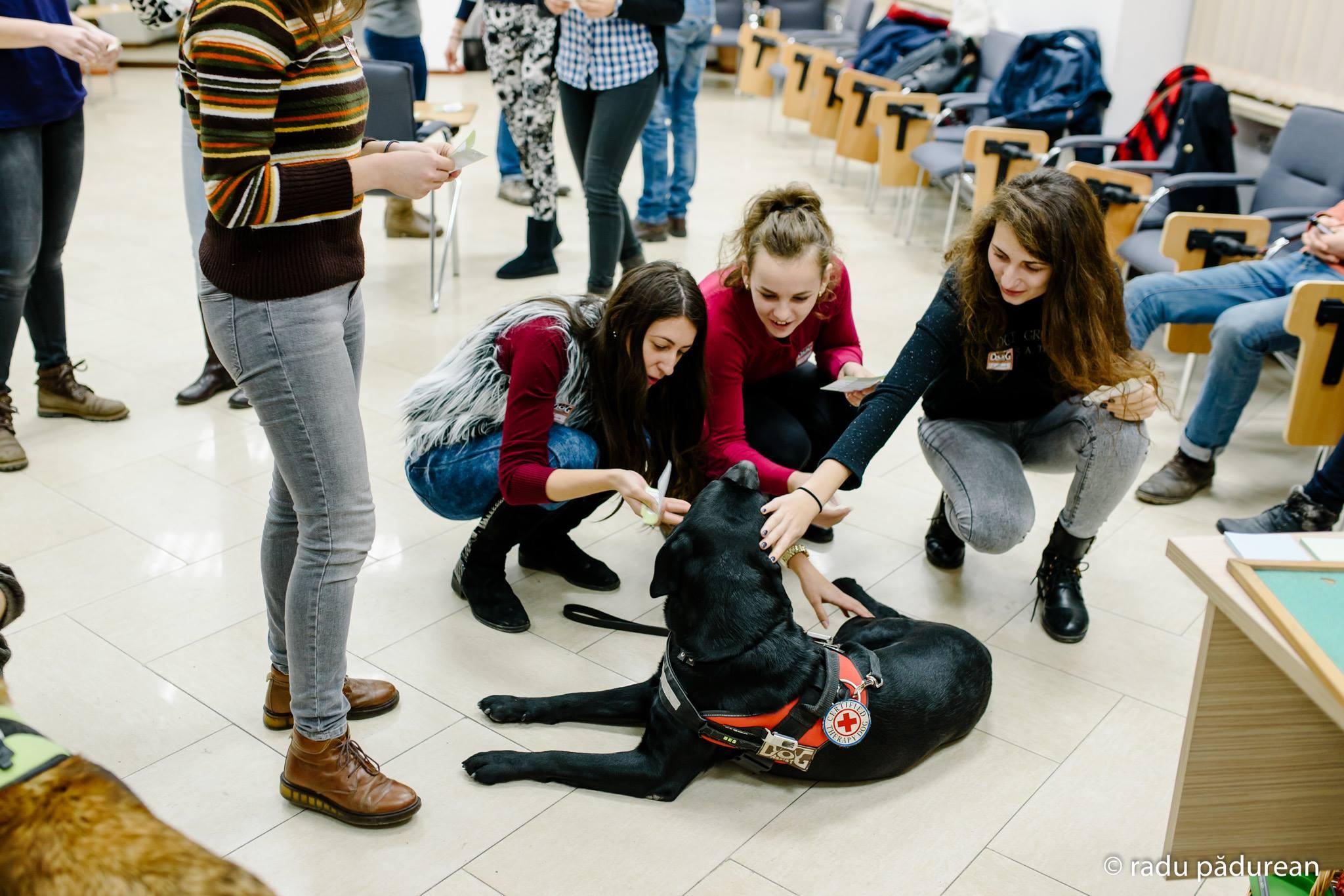 Bes este unul dintre câinii de terapie cu care studenții stresați își pot petrece timpul liber (Foto: Radu Pădurean)