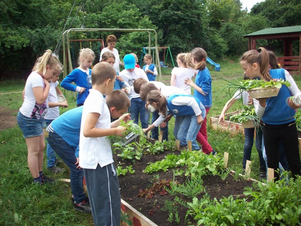 Amenajarea grădinii de la Școala Elf din Cluj-Napoca