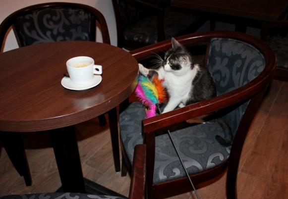 O cafea? (Foto: Dan Bodea)